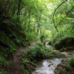 il bosco e la forra
